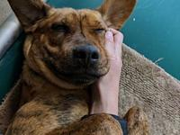 Kiwi's story Kiwi is looking for her forever home where