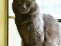 Klein is a young adult male kitty. He came from a