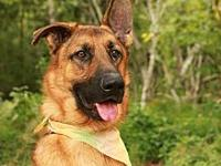 Klugen's story Klugen is a 3-year-old, Male, German