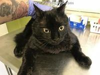 KNIGHT's story Clay County Animal Control Hours of