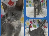 Knight's story Our adoption fee is 80.00 which covers