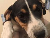 Knox's story I came to the Kentucky Humane Society from