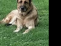Knox's story This handsome boy is 4 to 5 years old. He