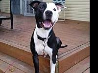 Knoxville's story   This beautiful pitty mix is