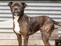 Knute is a sweet little 35 pound mix. He loves to just