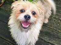 Koby's story This scruffy little face belongs to our