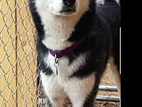 My story www.huskyrescueteam.org    If you