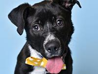 Kodak's story You can fill out an adoption application