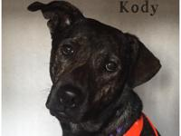 Kody is a 2 year old lab/boxer mix who was living the