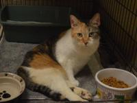 Do you know me?  I am a ten-year-old calico girl who