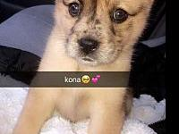 Kona's story Consider opening up your heart and home to