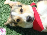 You can fill out an adoption application online on our