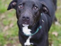 **SPECIAL NEEDS**  Kora is a 1 year old black and