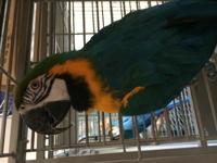 Koty is a teenage B&G Macaw. He will test to see how