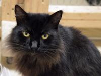 Kovu is a young FIV-positive boy whose family dumped