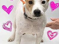 Kricket's story Kricket is a sweet girl who weighs