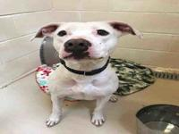 KRINGLE's story Hello! I am new to the shelter! Please