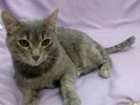 Kringle's story I am a sweet treat! I just want to show