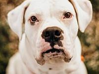 Krypto's story Look at what a handsome guy Krypto is!