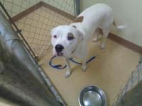 Krystal is a 1 year female dog who is looking for a new