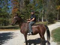 Ky. Mountain Horse. Twelve year old mare. Sweet and