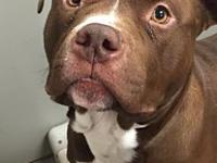 My story Kylan is a 2-3 yr old pit bull. He is loose