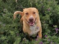 Kylie's story This beautiful smart girl, sure is a mutt