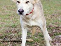 Kyra's story Kyra #2125 is a 1-year-old female,