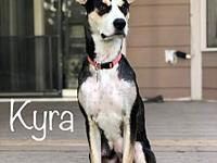 Kyra's story Kyra is a 2 year old mixed breed rescued