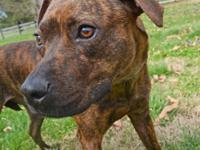 L.O. is a super sweet very small adorable warm brindle
