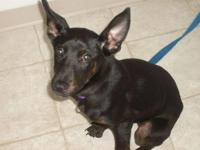 Description Black female 5 month old puppy, very sweet