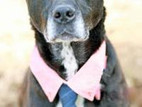 Kelso is a handsome mature Border Collie Lab mix