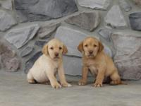 Attractive young puppies all set for their brand-new