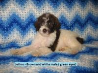 We have two litters available go to our site at