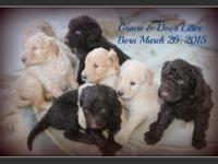 Puppies!!! Gracie and Doc have a beautiful litter of
