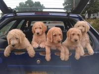 The puppies pictured are from a previous litter. The
