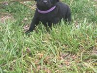 DeWormed . This sweet little lady is all black . Now