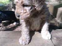 Beautiful puppy. Healthy and lively. Reserve any of our
