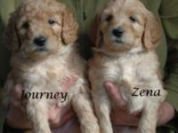 Can't decide between a Labradoodle or a Goldendoodle?