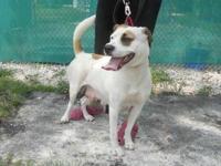 Labrador Retriever - Asia - Medium - Young - Female -