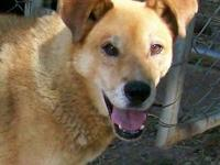 Labrador Retriever - Baby Girl--sponsored For Rescue! -
