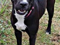 Labrador Retriever - Blackie - Medium - Young - Female
