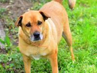 Labrador Retriever - Footz - Medium - Senior - Male -