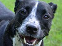 Labrador Retriever - Freckles - Medium - Young - Female