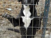 Labrador Retriever - Hope - Medium - Young - Female -