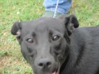 Labrador Retriever - Hydro - Medium - Young - Male -