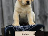 Archie is a happy, people loving puppy, ready to find