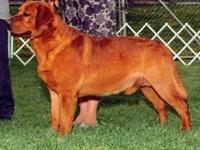 Dutch Acres is expecting several Fox Red litters in May