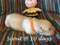 Scout is a robust little pup.One of the bigger ones of