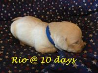 Rio is a strong little pup, all brand new and sweet. He